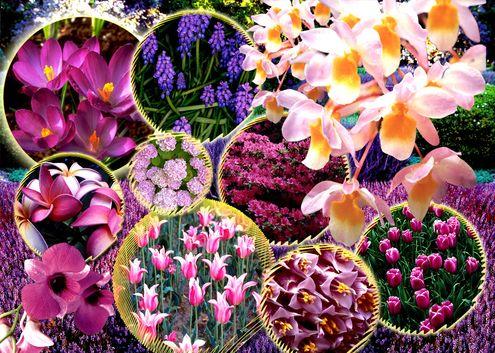 En güzel çiçekler