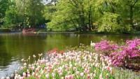 Bahar Resimleri