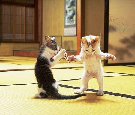 Çok komik oyun oynayan kedi resimleri