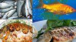 Balıklar Deniz Ürünlerinin Mutfaktaki Yeri ve Önemi